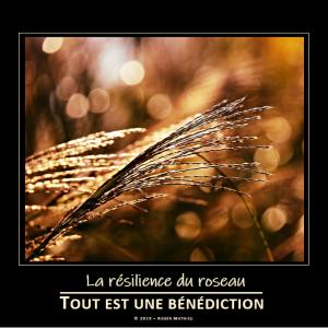 la_resilience_du_roseau